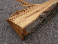Black Locust - Very coarse bark with hard, 'stringy' wood that can be difficult to split. Good heat value. Often used for fence posts since this wood resists decay when in contact with the soil.