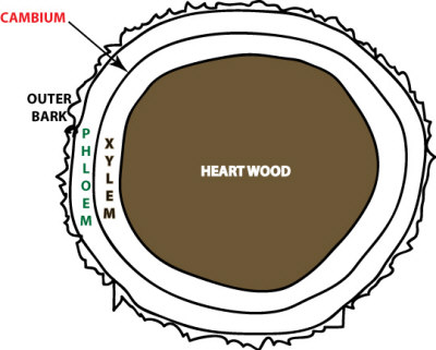 tree-trunk-cross-section.jpg