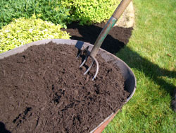Dyed brown double-shredded mulch being spread with a pitch fork.