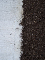 Experience has shown that leaving mushroom compost topdressing part way onto the concrete can help discourage washouts along the edge when it rains.Keep your new grass seed moist with daily watering. Spot-seed any bare or thin areas in 3 to 4 weeks. Mow the grass when it needs cut. -