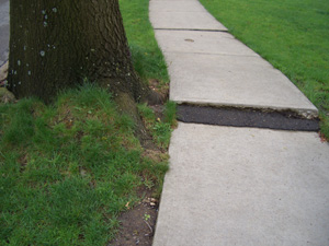 Root heaved sidewalk creates a tripping hazard