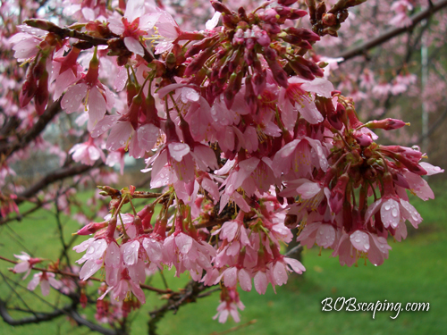 Flowering trees in Springtime brighten our world.